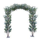 Eucalyptus Arch Green